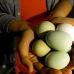 Johanna Björk: 100519: Green Eggs