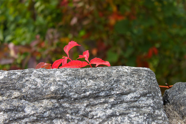 Concrete Flower: 101028: Fall in Fort Tryon Park